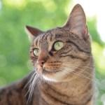 「タタリ神になんかなりたくにゃい!」徳島で撮影された『もののけ姫』の猫コスプレが尊すぎる😳