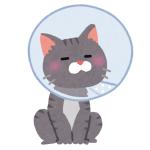 エリザベスカラーを嫌がった猫に「どん兵衛」の容器を使った結果www