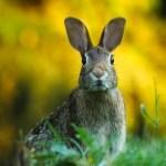 「ハッ!」 おやつの途中で突然用事を思い出したウサギの表情がマンガみたいw