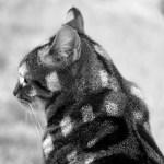 マインクラフト猫!? あまりにも四角いネコが発見されるwww