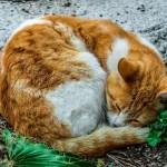 """うちの猫がきわめて""""非生物的""""な形状に…😽"""