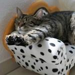 猫さんたちにIKEAの猫用ベッドを買ってあげた結果…😂