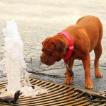「なぜ犬が…?」トロントの公園にある噴水が謎デザインすぎるwww