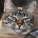 「悟りの境地…」廊下に1時間締め出されてしまった猫の表情が切なすぎるww