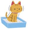 猫が排尿しなくなったので獣医に診せたら…衝撃の診断結果がwww