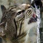 うちの猫、「ちょっと」水飲むの苦手なんですよね…