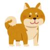 笑っちゃいけないけど笑っちゃう…顔を蜂に刺された柴犬のオマヌケな表情www