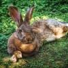 【!?】進研ゼミの「小三チャレンジ」に登場するウサギのキャラクター、声がイケボすぎるwww