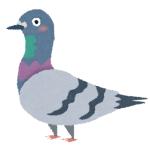 【動画】スペインの街から人が消えた結果、いつも人間のエサに頼りきっていた「鳩」たちが大変なことに…😱