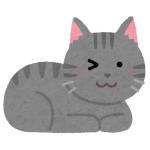 【動画】どうしても飼い主にモフってほしい猫さん、あざとすぎる😹
