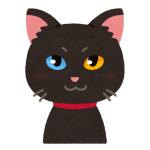 どうしても飼い主に構って欲しい黒猫さんが…とんでもない技術を習得してしまうww