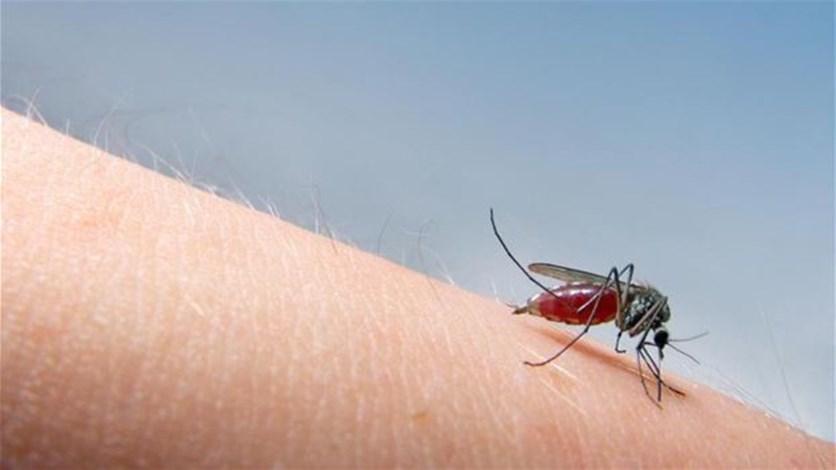Panduan Penggunaan Raket Nyamuk dan Tips Memilih yang Tepat