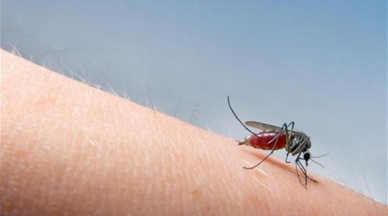 Cara Membasmi Nyamuk dengan Raket
