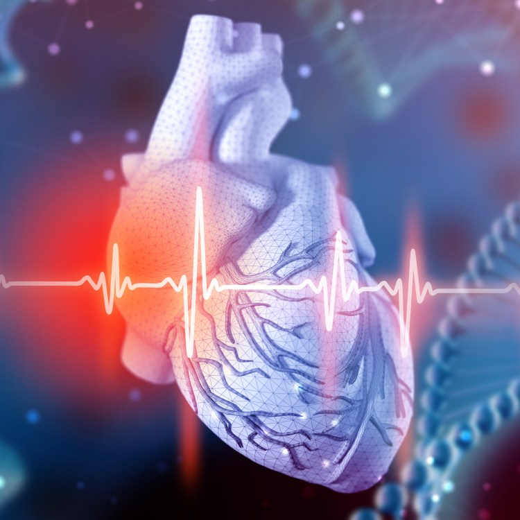 Intégration d'exercices cardiovasculaires<p><p>