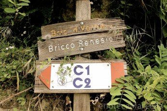 The legend has it that Arneis was discovered on this hill in Roero, called Bric d'Vorneis in dialect ...