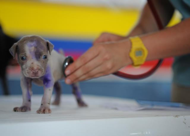 veteriner yavru köpeği muayene ediyor