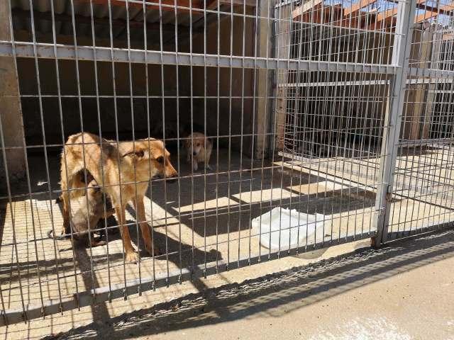 Edirne, Keşan Belediyesi Geçici Hayvan Barınağı veteriner hekimi herkesi kapısının önüne su koymaya davet etti