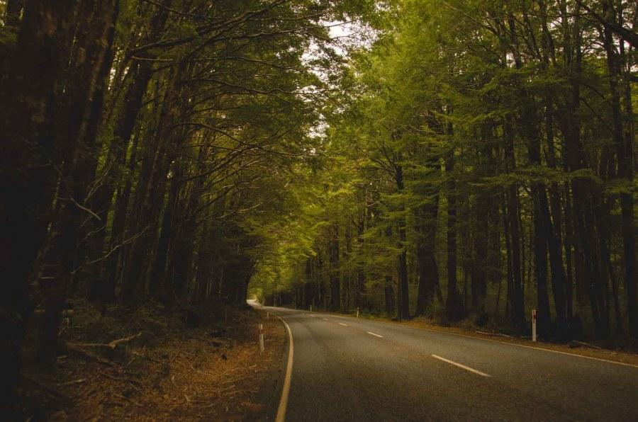 forêt route voyage destination