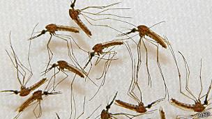 malaria-mosquitos-vacuna malaria
