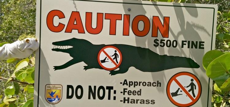 cartel caimán