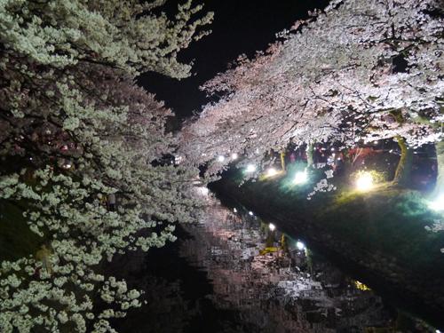 yozakura01