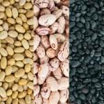 Genoma del poroto: Pistas sobre su origen y herramientas para mejorar el cultivo