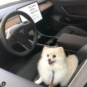 Tesla Pushes Software Update to Dog Mode