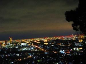 箕面 夜景 木