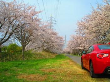 滋賀 桜と一緒に車が撮れるスポット 86