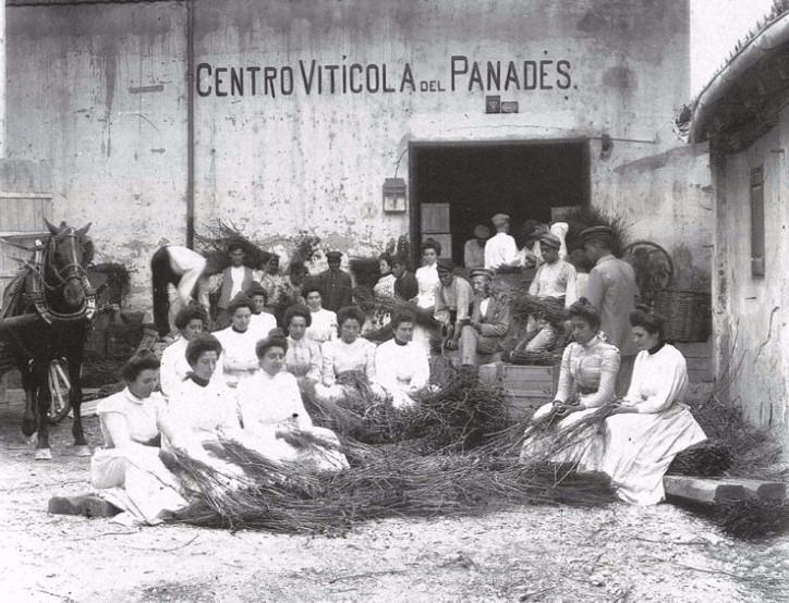Taller del Centre Vitícola del Penedès historia