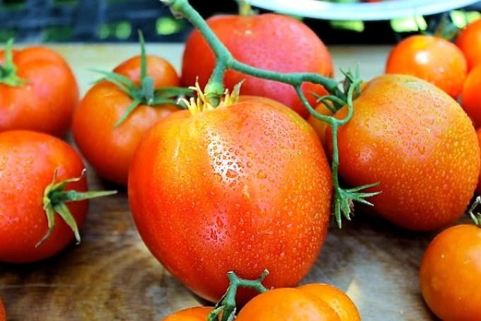 tomates, tomatomanía