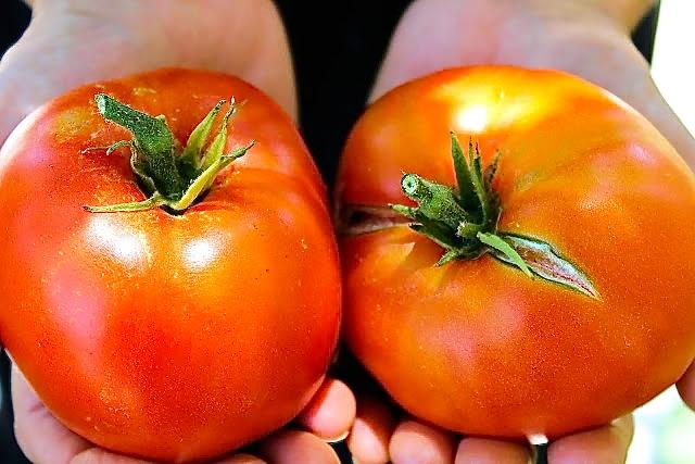 tomatoes by enrilemoine