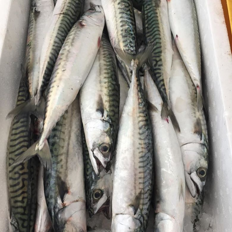 poissons méditerranée