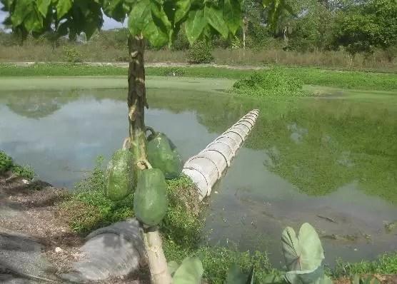 Colapsa alcantarillado de Hato Mayor; heces fecales caen al río Maguá
