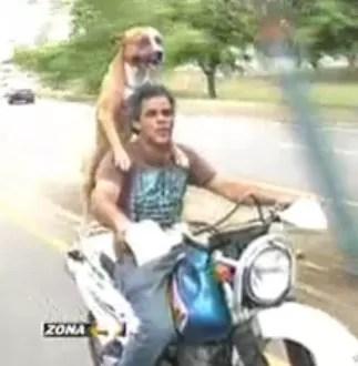Amigos al extremo, amo y perro salen juntos a pasear por un motor por la ciudad