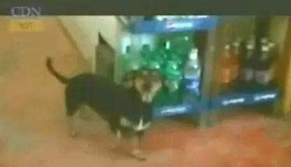 Perrita evitó un atraco (video)