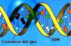 Una proteína podría ser la clave para bloquear las metástasis causada por el cáncer