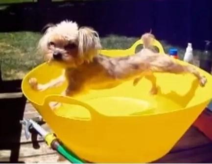 Yo no me quiero bañar…
