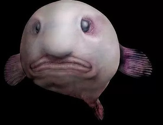 Un pez con cara de asco elegido el animal más feo del mundo