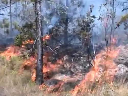 Fuego bosque constanza