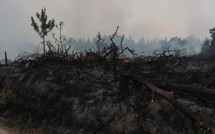 constanza fuego