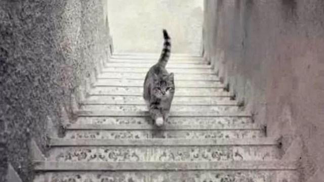 Foto gato sube baja escaleras