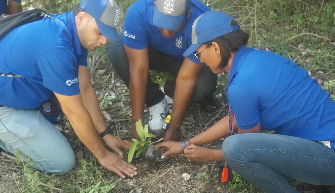 Reforestan tres kilómetros del Sendero Ecoturístico  Padre Nuestro en Bayahibe
