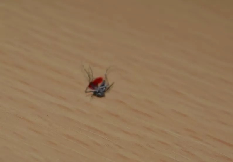 Van 73 muertes por dengue