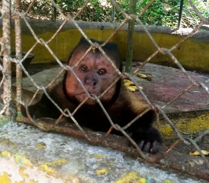 Fotos: El zoológico de Moca, qué desastre!