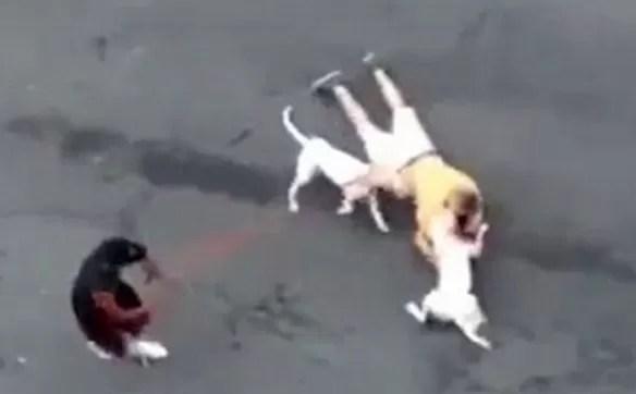 Sangriento ataque de pit bulls a hombre en El Bronx (VIDEO)