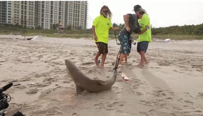 Le ganó la batalla a un tiburón que lo mordió