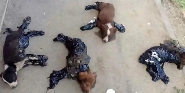 perros alkitran crueldad