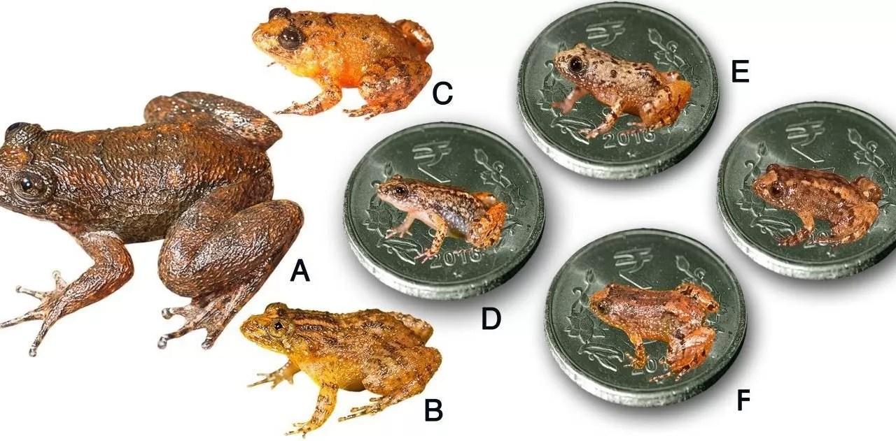Estudio alerta de la amenaza sobre especies raras y su papel ecológico clave