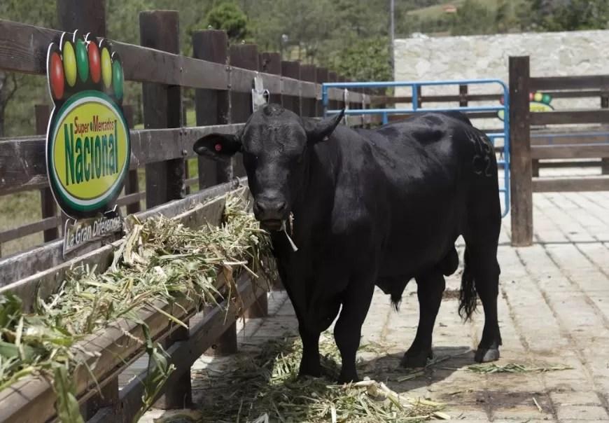 Supermercados Nacional crea finca genética que mejora calidad del ganado en RD